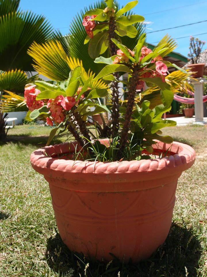 Flowers-e1471175345693